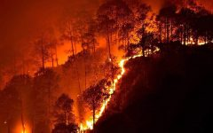 The Reality of the Australian Wildfires